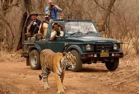 Ranthambore Tiger Safari Tour packages