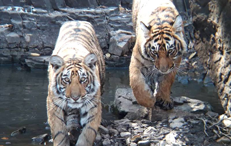 Ranthambore Wildlife Safari Tour Package