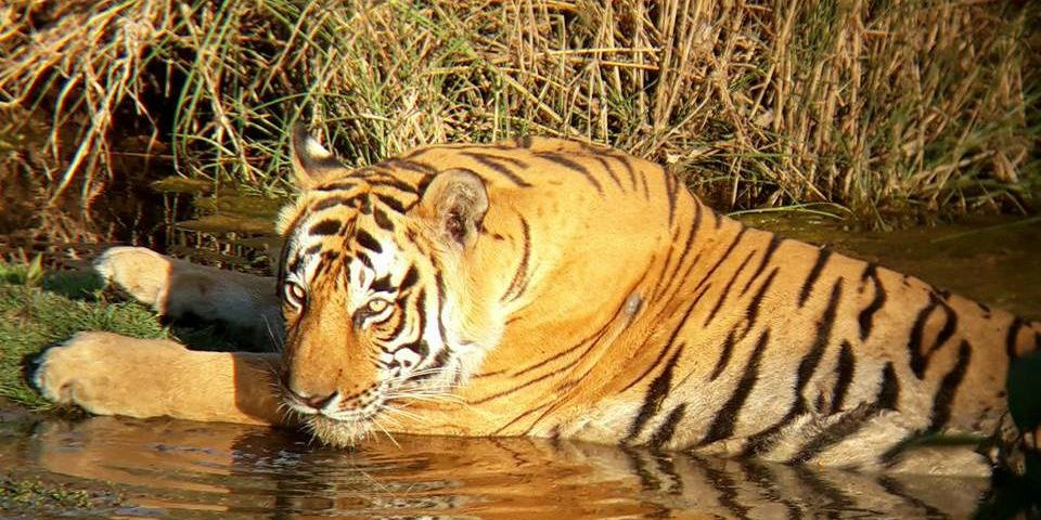 ranthambore-park-open-in-monsoon