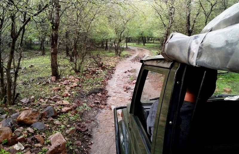 ranthambore-jungle-safari-monsoon