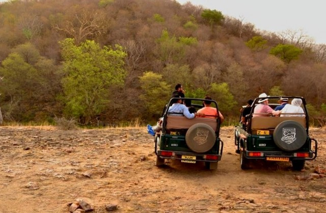5 Reasons to Must Visit Ranthambore National Park