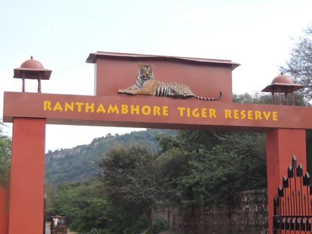 Wildlife in Ranthambore National Park