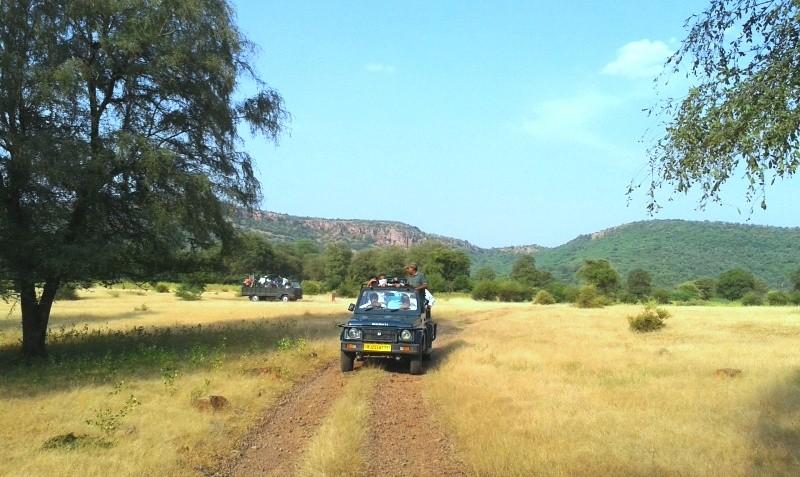 Jungle-safari-in-Ranthambore-National-Park