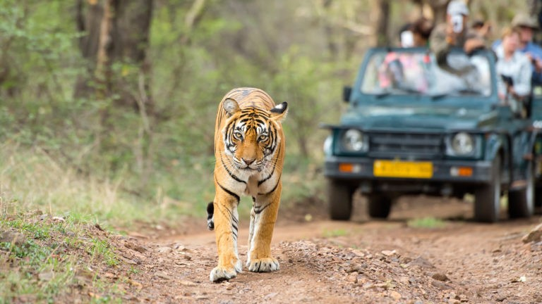 About the Guidelines for Safe Travel to Ranthambore National Park during COVID-19