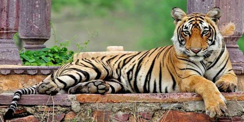Ranthambore National Park is opening for tiger lovers from 1 October 2020, a positive approach is needed to promote tourism
