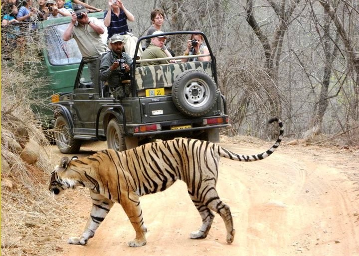 Ranthambore-National-Park-World-Tourism-Day