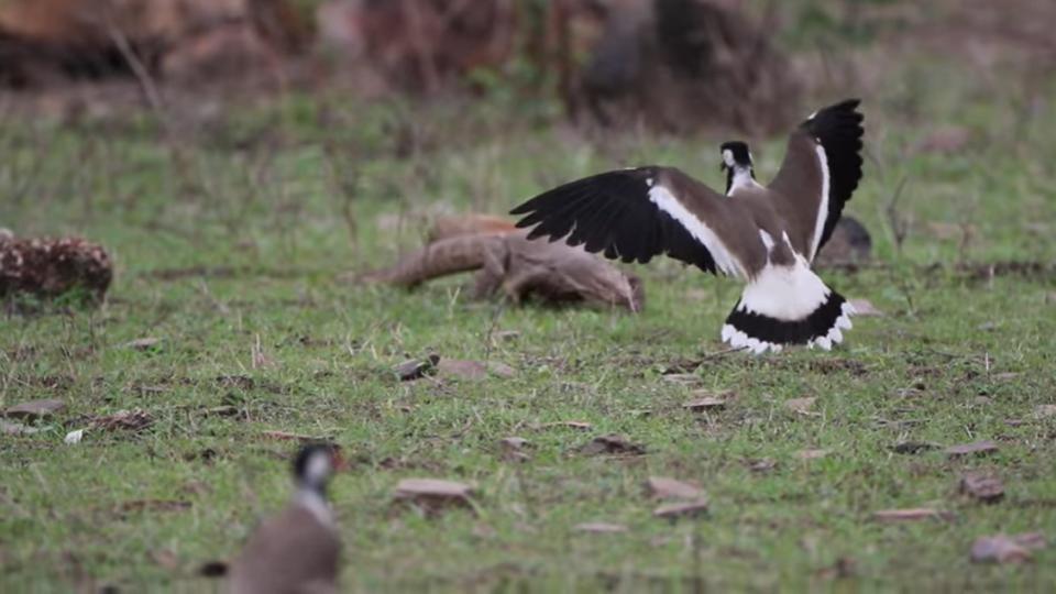 Ranthambore-wildlife-Photos