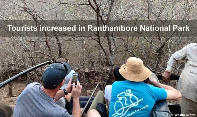tourist-increased-in-ranthambore