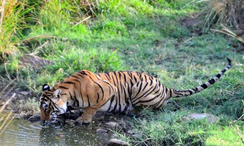 Best-Zone-for-Tiger-Sighting-in-Ranthambore