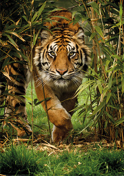 Ranthambore Online Safari Booking