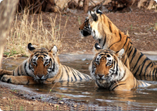 The Ranthambore