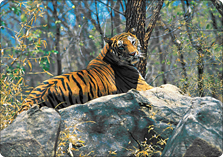 Ranthambore How To Reach